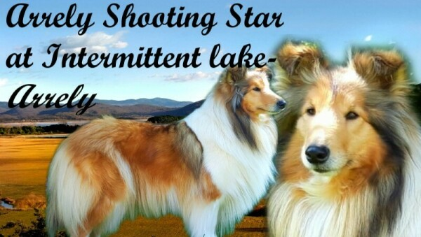 ARRELY SHOTING STAR AT INTERMITTENT LAKE- Arrely